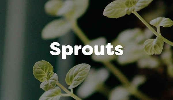 Sprouts are delicious as a side dish topped with a light dressing or in soups
